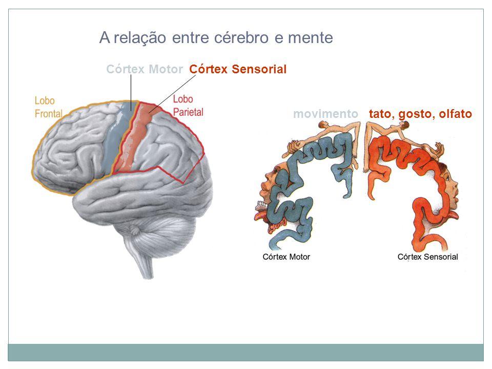 A relação entre cérebro e mente Córtex Motor Córtex Sensorial movimento tato, gosto, olfato