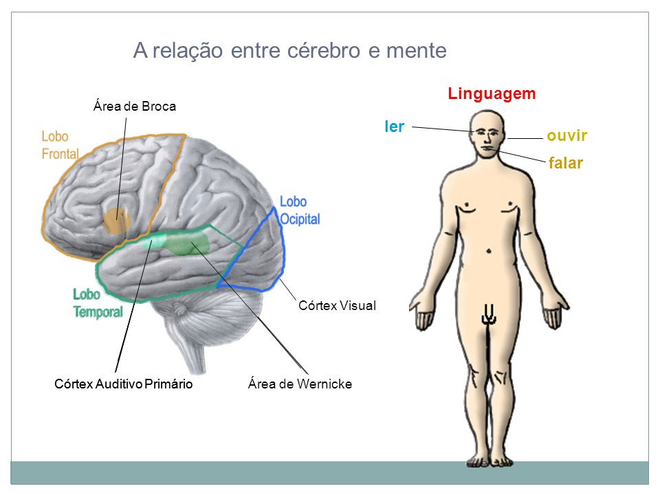 A relação entre cérebro e mente Córtex Auditivo Primário Linguagem Córtex Auditivo Primário Área de Wernicke ouvir ler Córtex Visual Área de Broca falar