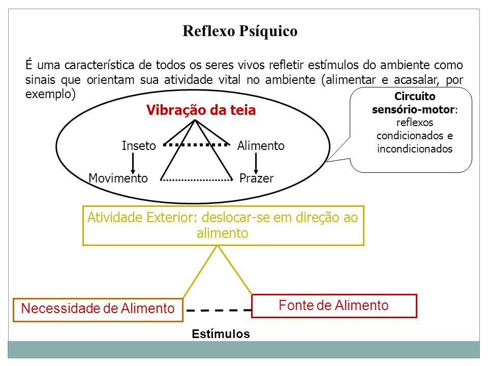 Reflexo Psíquico É uma característica de todos os seres vivos refletir estímulos do ambiente como sinais que orientam sua atividade vital no ambiente (alimentar e acasalar, por exemplo) Fonte de Alimento Atividade Exterior: deslocar-se em direção ao alimento Necessidade de Alimento Vibração da teia Inseto Alimento Movimento Prazer Circuito sensório-motor: reflexos condicionados e incondicionados Estímulos