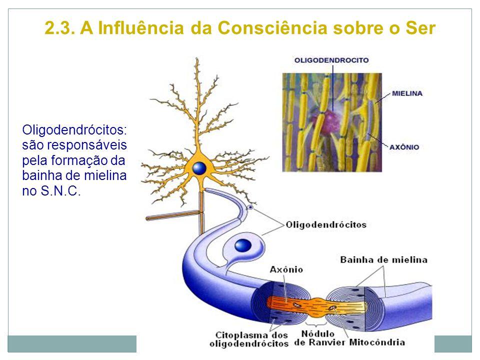 2.3. A Influência da Consciência sobre o Ser Oligodendrócitos: são responsáveis pela formação da bainha de mielina no S.N.C.
