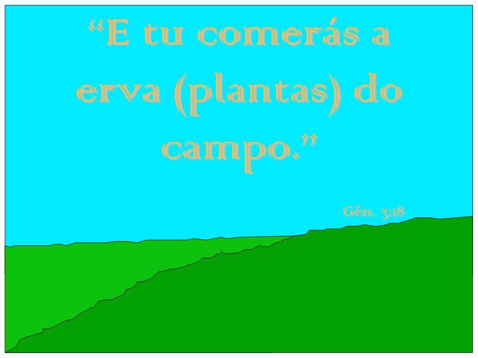 """E tu comerás a erva (plantas) do campo."" Gên. 3:18"