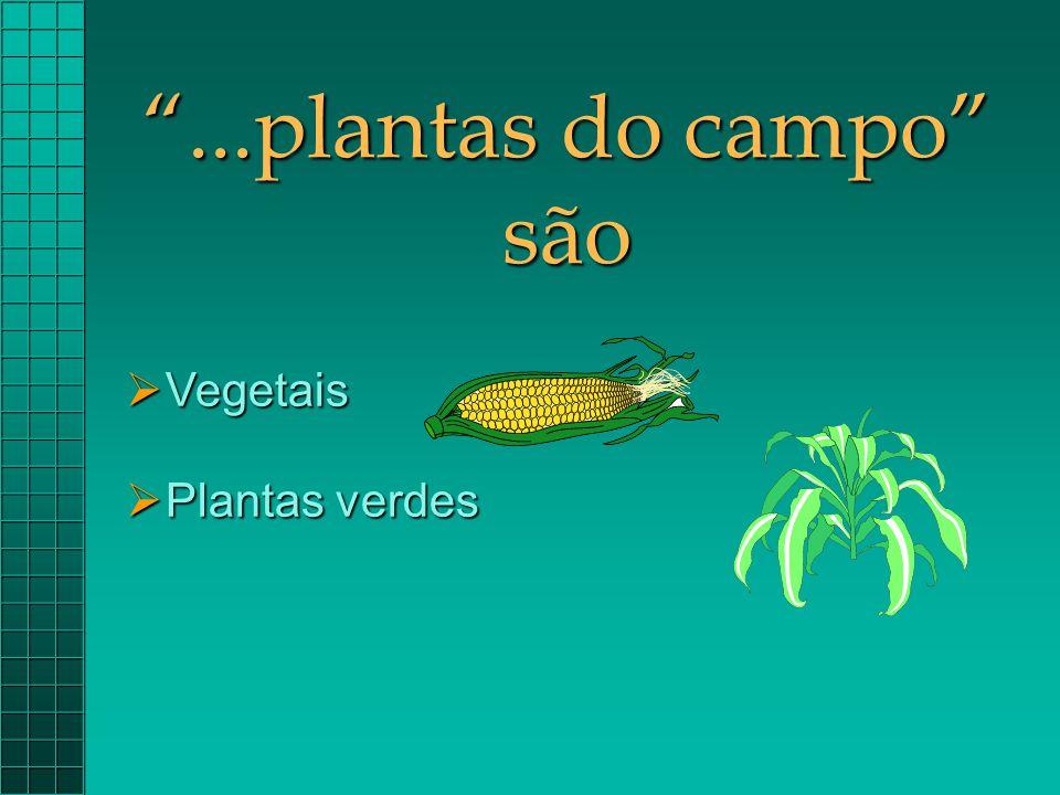 """""""...plantas do campo"""" são  Vegetais  Plantas verdes"""
