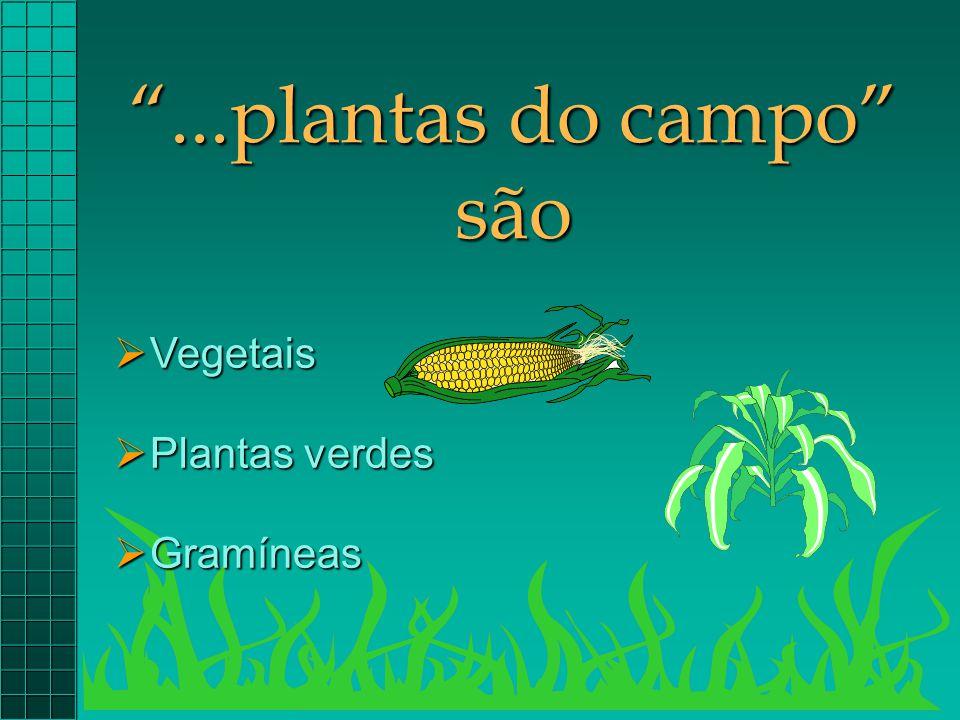 """""""...plantas do campo"""" são  Vegetais  Plantas verdes  Gramíneas"""