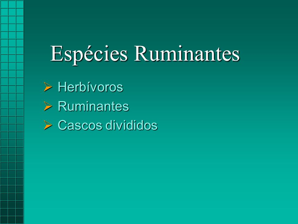  Herbívoros  Ruminantes  Cascos divididos Espécies Ruminantes