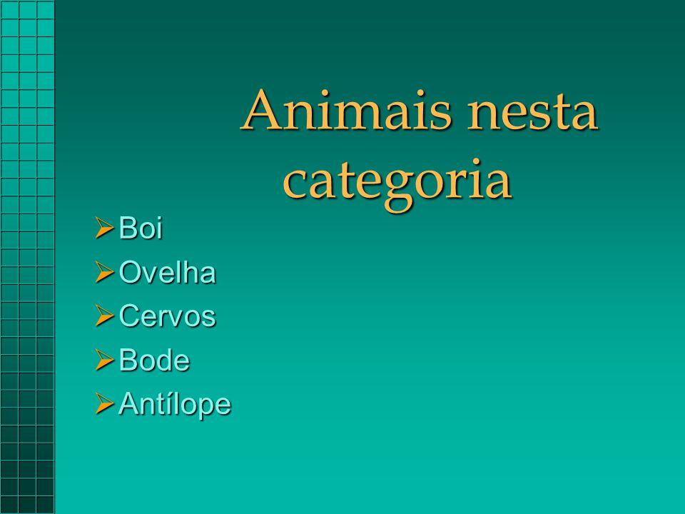 Animais nesta categoria  Boi  Ovelha  Cervos  Bode  Antílope