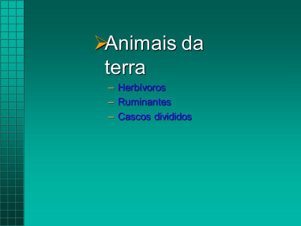  Animais da terra –Herbívoros –Ruminantes –Cascos divididos