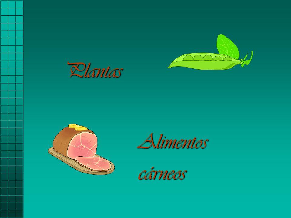 Plantas Alimentoscárneos