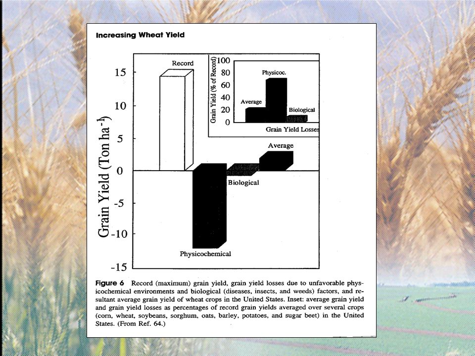 Tabela 6.Interação entre doses de nitrogênio e estádios de aplicação, no número de grãos/m2.