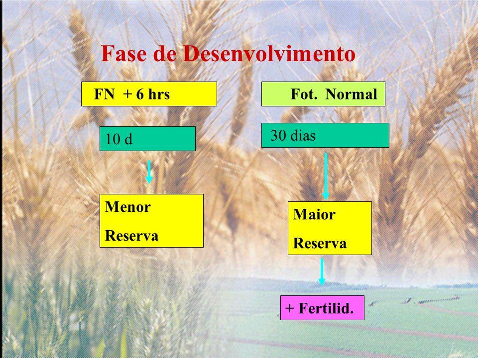 Fase de Desenvolvimento Fot. Normal 30 dias Menor Reserva Maior Reserva + Fertilid. FN + 6 hrs 10 d