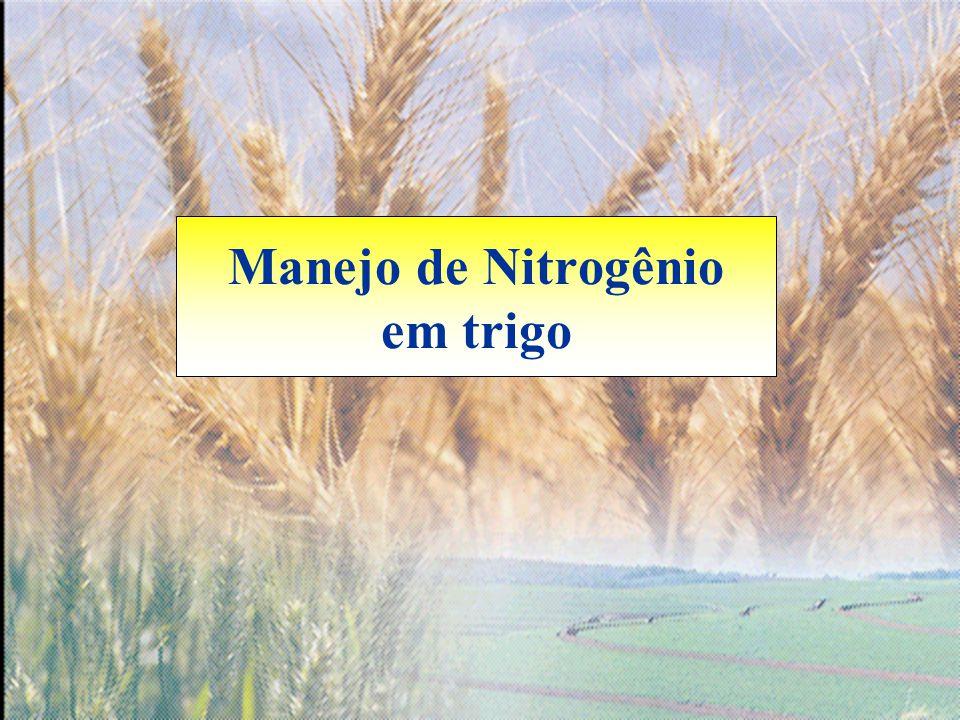 Manejo de Nitrogênio em trigo