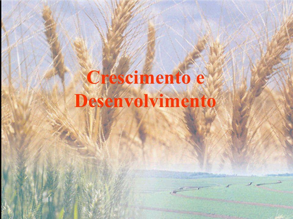 Alta produção de trigo Adequada Nutrição Nitrogenada Rápido estabelecimento de grande Canopy para Fotossíntese: i.e.