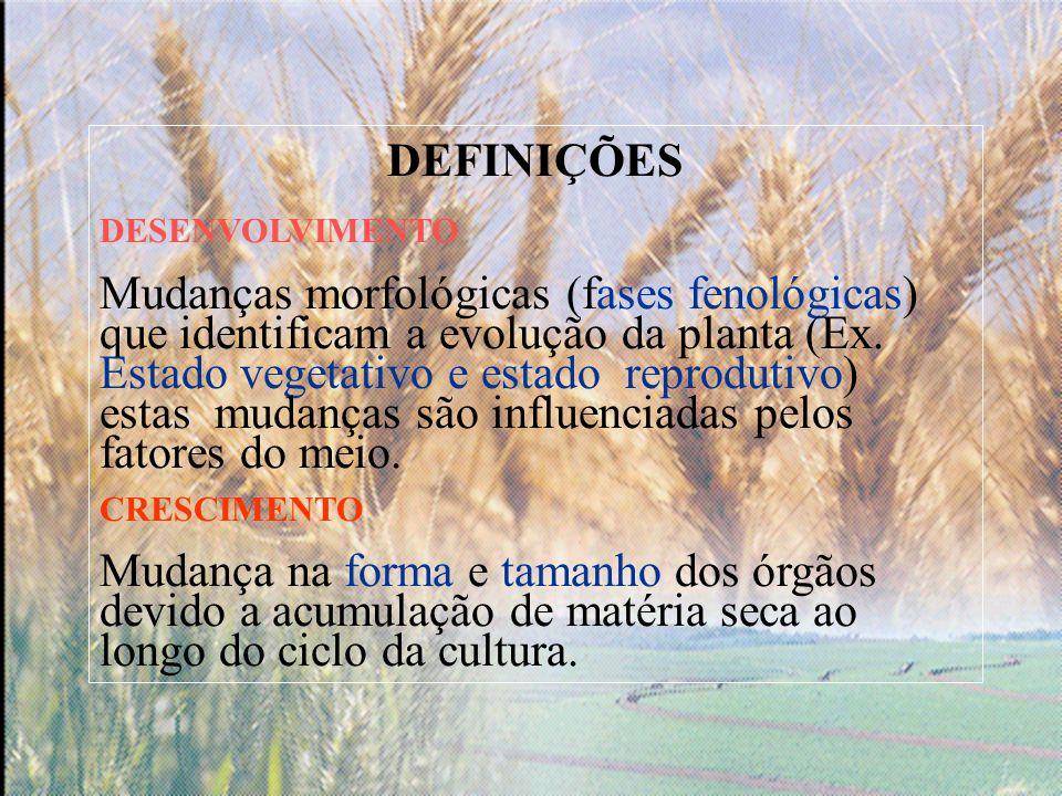 DEFINIÇÕES DESENVOLVIMENTO Mudanças morfológicas (fases fenológicas) que identificam a evolução da planta (Ex.
