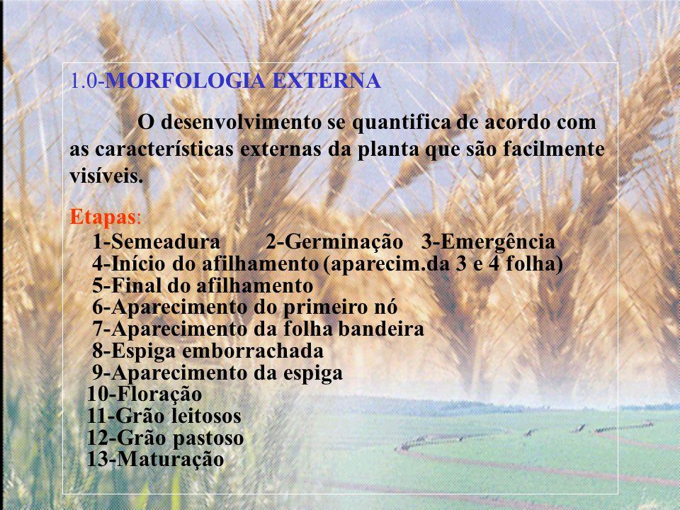 CONCLUSÕES O aumento no número de espiguetas/espiga aumenta o peso médio de grãos da espiga e contribui para reduzir a associação negativa entre o número de grãos/m2 e peso de grãos.