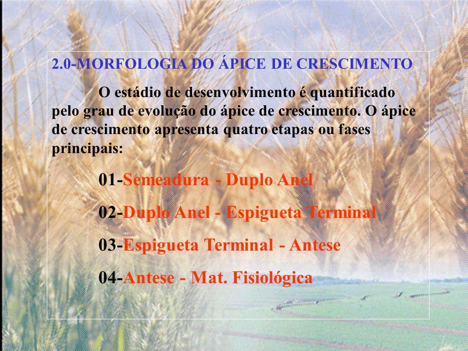 2.0-MORFOLOGIA DO ÁPICE DE CRESCIMENTO O estádio de desenvolvimento é quantificado pelo grau de evolução do ápice de crescimento.