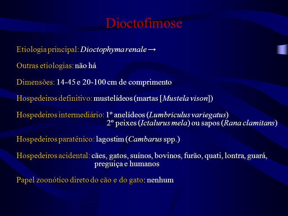 Localização taxonômica de Dioctophyma renale Reino Metazoa Filo Nematoda Classe Enoplea Subclasse Enoplia Superfamília Dioctophymatoidea Família Dioctophymatidae Gênero Dioctophyma