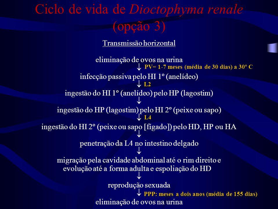Hematúria Lombalgia Quais os sinais de dioctofimose?