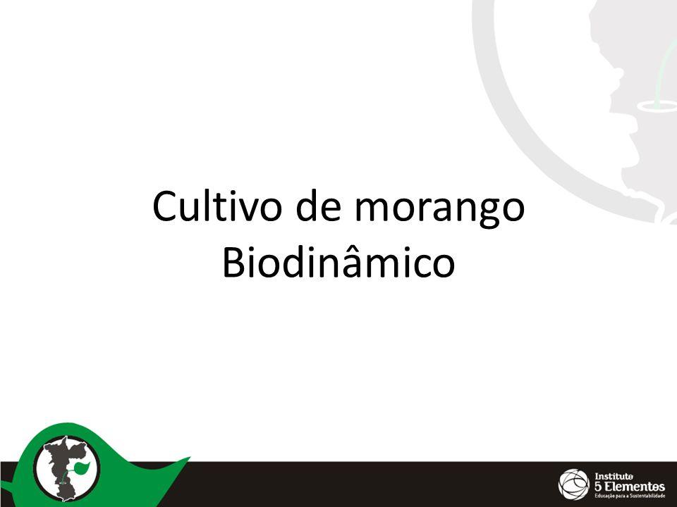 Mycosphaerella Botrytis ( mofo cinzento)