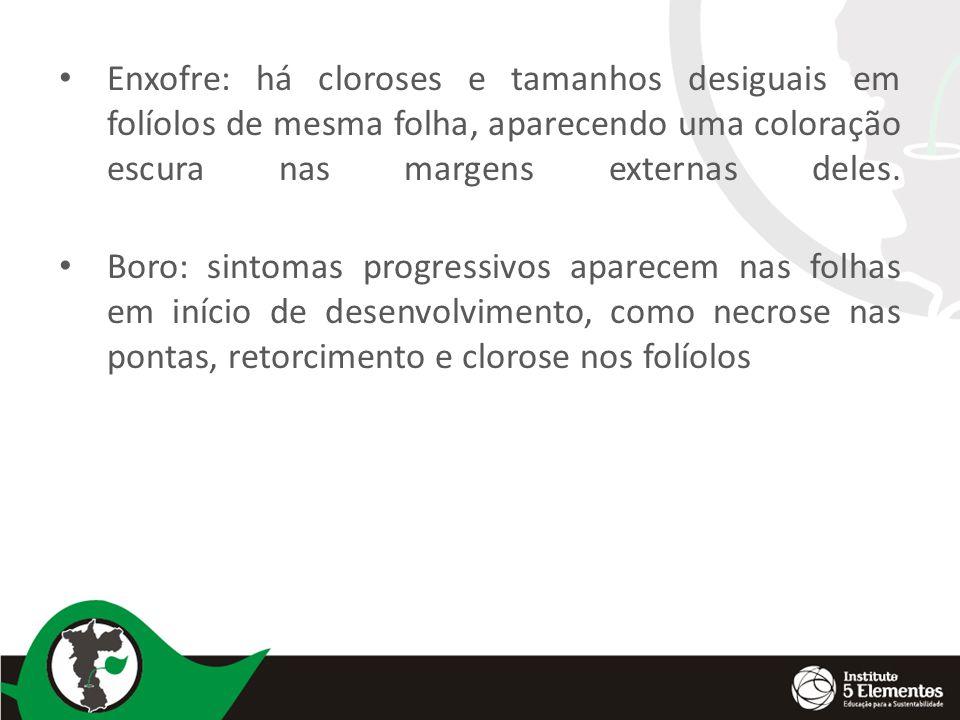 Enxofre: há cloroses e tamanhos desiguais em folíolos de mesma folha, aparecendo uma coloração escura nas margens externas deles. Boro: sintomas progr