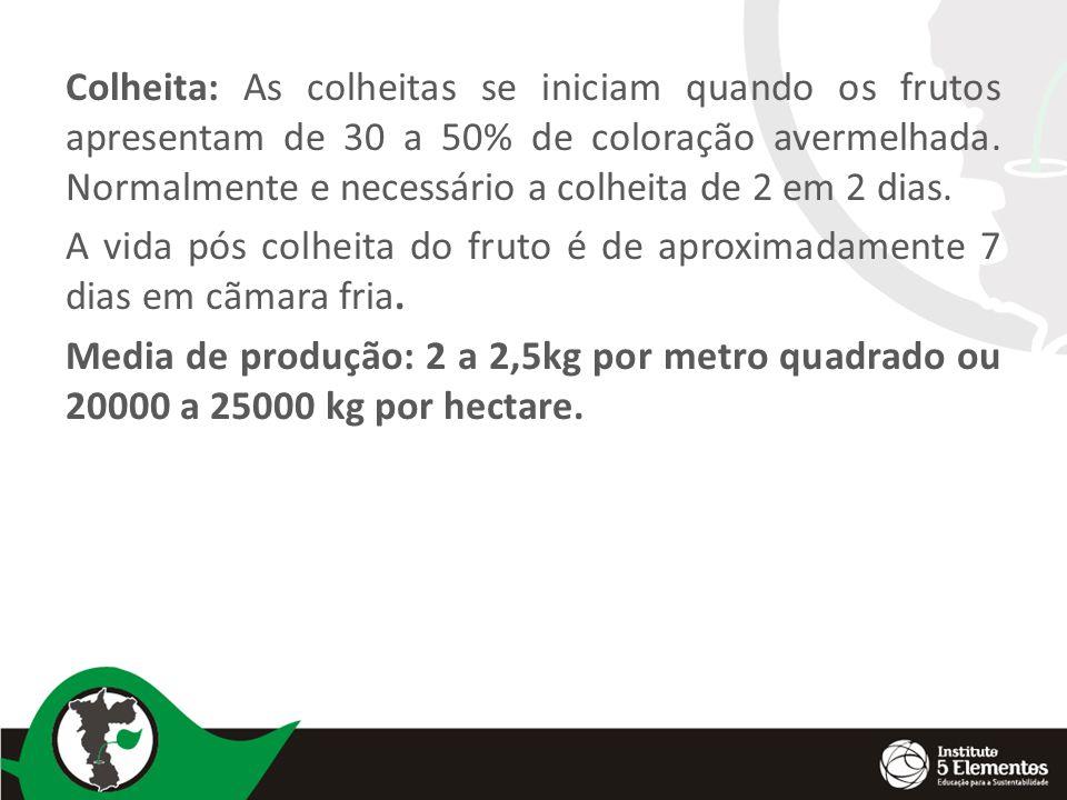 Colheita: As colheitas se iniciam quando os frutos apresentam de 30 a 50% de coloração avermelhada. Normalmente e necessário a colheita de 2 em 2 dias