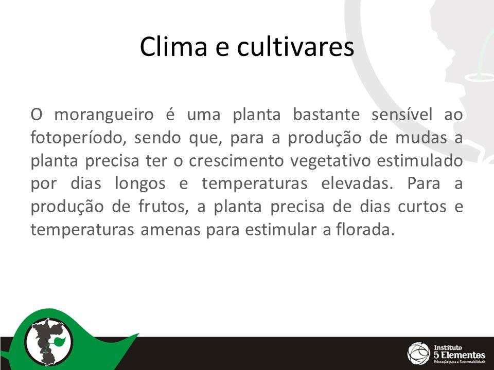 Clima e cultivares O morangueiro é uma planta bastante sensível ao fotoperíodo, sendo que, para a produção de mudas a planta precisa ter o crescimento