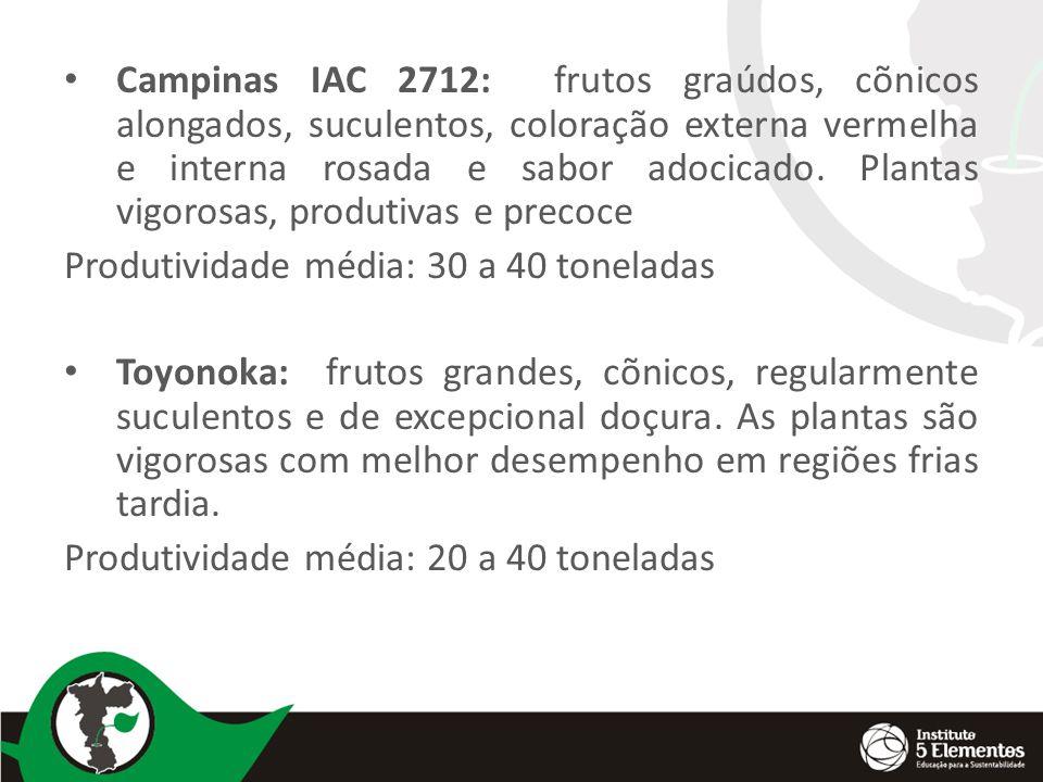 Campinas IAC 2712: frutos graúdos, cõnicos alongados, suculentos, coloração externa vermelha e interna rosada e sabor adocicado. Plantas vigorosas, pr