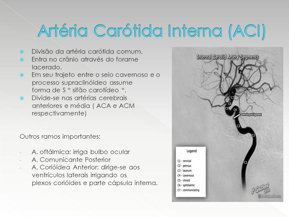  Divisão da artéria carótida comum.  Entra no crânio através do forame lacerado.  Em seu trajeto entre o seio cavernoso e o processo supraclinóideo