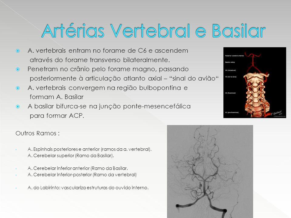  A. vertebrais entram no forame de C6 e ascendem através do forame transverso bilateralmente.  Penetram no crânio pelo forame magno, passando poster