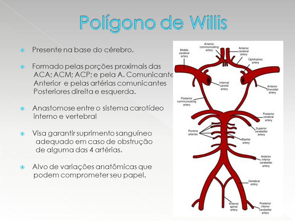  Presente na base do cérebro.  Formado pelas porções proximais das ACA; ACM; ACP; e pela A. Comunicante Anterior e pelas artérias comunicantes Poste