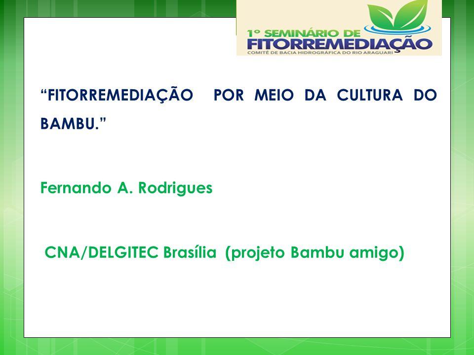 """""""FITORREMEDIAÇÃO POR MEIO DA CULTURA DO BAMBU."""" Fernando A. Rodrigues CNA/DELGITEC Brasília (projeto Bambu amigo)"""