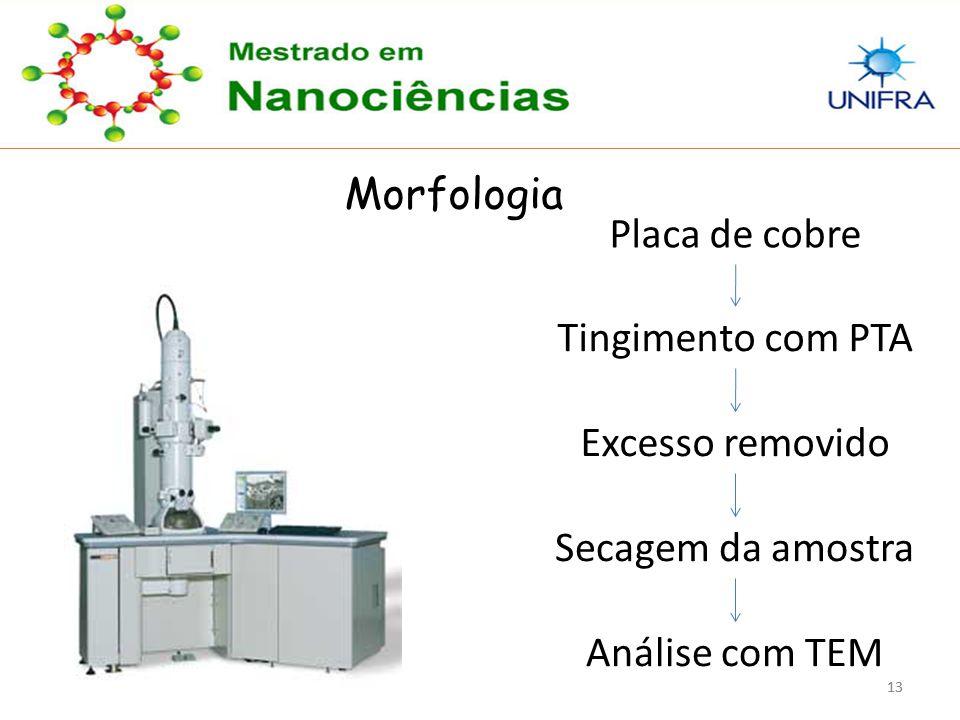 13 Morfologia Placa de cobre Tingimento com PTA Excesso removido Secagem da amostra Análise com TEM