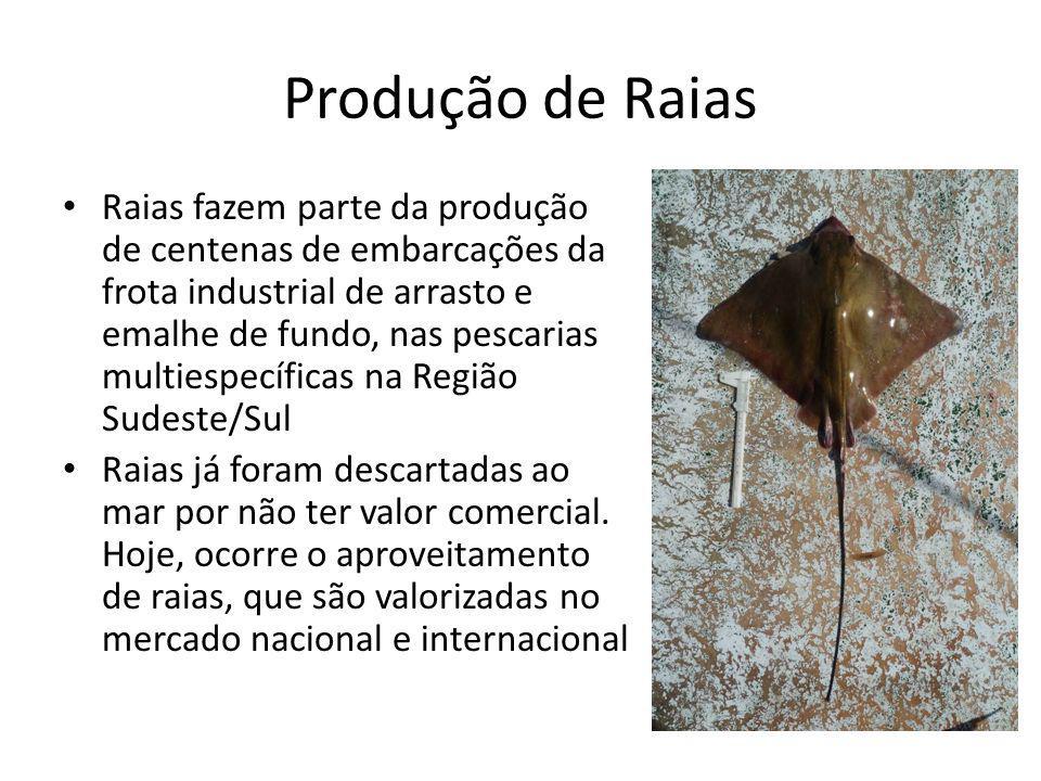 Produção de Raias Raias fazem parte da produção de centenas de embarcações da frota industrial de arrasto e emalhe de fundo, nas pescarias multiespecíficas na Região Sudeste/Sul Raias já foram descartadas ao mar por não ter valor comercial.