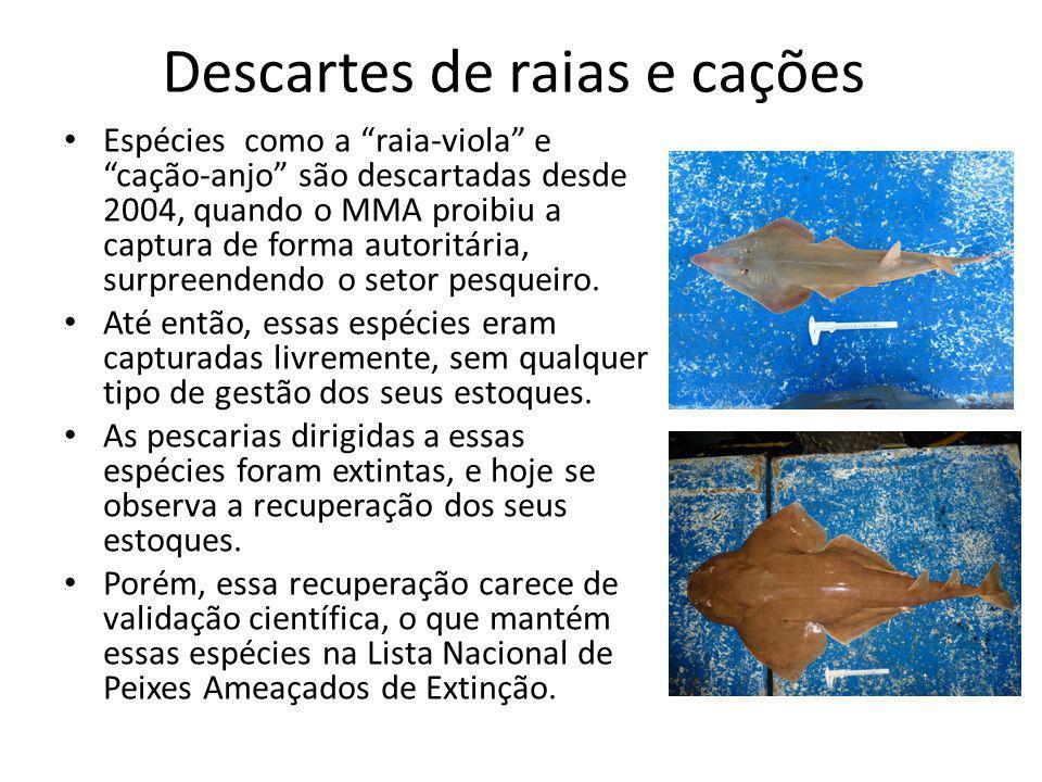 Descartes de raias e cações Espécies como a raia-viola e cação-anjo são descartadas desde 2004, quando o MMA proibiu a captura de forma autoritária, surpreendendo o setor pesqueiro.