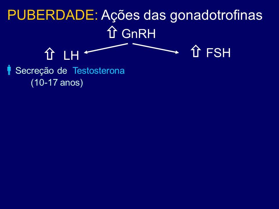  LH  GnRH PUBERDADE: Ações das gonadotrofinas  FSH  Secreção de Testosterona (10-17 anos)