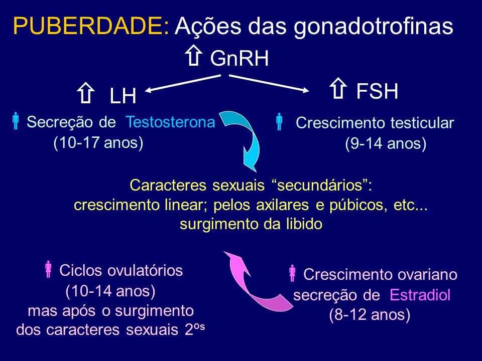 " LH Caracteres sexuais ""secundários"": crescimento linear; pelos axilares e púbicos, etc... surgimento da libido  GnRH PUBERDADE: Ações das gonadotro"