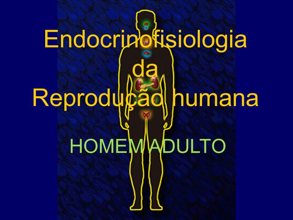 Endocrinofisiologia da Reprodução humana HOMEM ADULTO