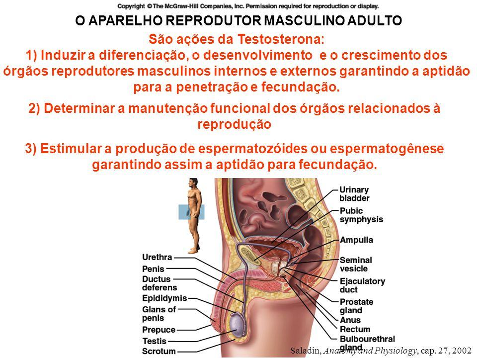 São ações da Testosterona: 1) Induzir a diferenciação, o desenvolvimento e o crescimento dos órgãos reprodutores masculinos internos e externos garant