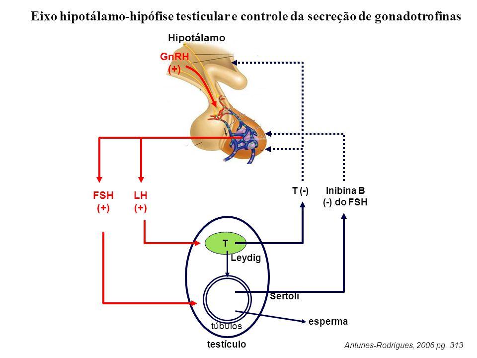 Eixo hipotálamo-hipófise testicular e controle da secreção de gonadotrofinas Leydig T túbulos T (-) Hipotálamo FSH (+) LH (+) esperma testículo Antunes-Rodrigues, 2006 pg.
