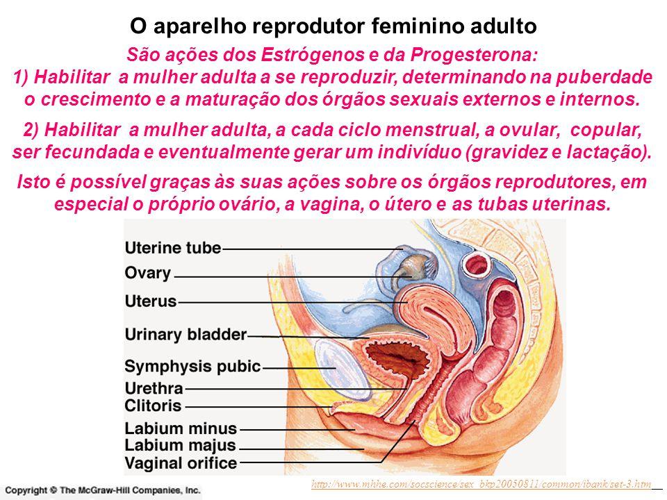 http://www.mhhe.com/socscience/sex_bkp20050811/common/ibank/set-3.htm O aparelho reprodutor feminino adulto 2) Habilitar a mulher adulta, a cada ciclo menstrual, a ovular, copular, ser fecundada e eventualmente gerar um indivíduo (gravidez e lactação).