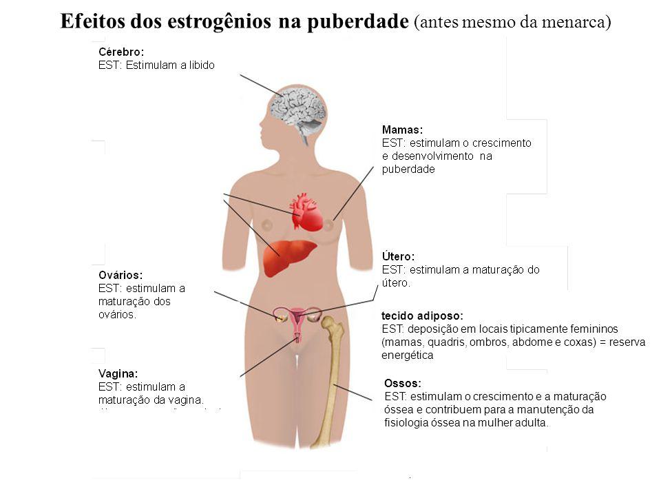 Efeitos dos estrogênios na puberdade (antes mesmo da menarca) tecido adiposo: EST: deposição em locais tipicamente femininos (mamas, quadris, ombros, abdome e coxas) = reserva energética Ossos: EST: estimulam o crescimento e a maturação óssea e contribuem para a manutenção da fisiologia óssea na mulher adulta.