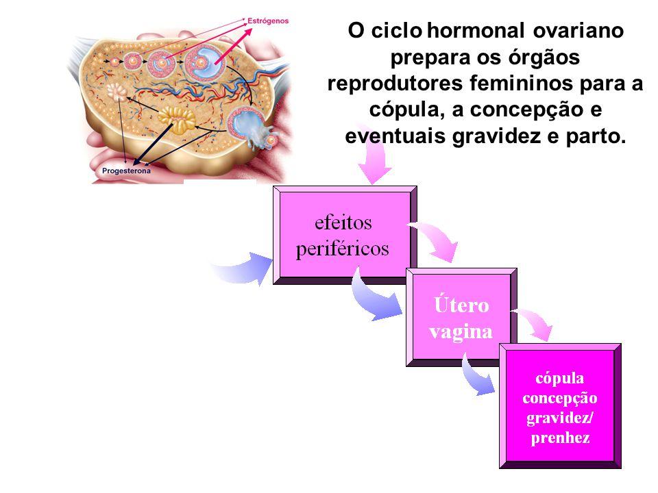 O ciclo hormonal ovariano prepara os órgãos reprodutores femininos para a cópula, a concepção e eventuais gravidez e parto.