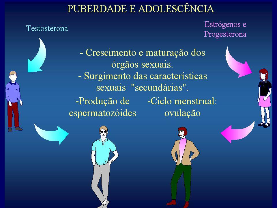 Fase menstrual (±5 dias) Fase pré- ovulatória ( ± 9 dias) ovulação Fase pós- ovulatória (14 dias) Fase menstrual ( ± 5 dias) O CICLO HORMONAL OVARIANO INDUZ OS CICLOS DOS EPITÉLIOS UTERINO E VAGINAL http://dept.physiol.arizona.edu/courses/psio202/spring2005/materials/slides_20050429_2.pdf