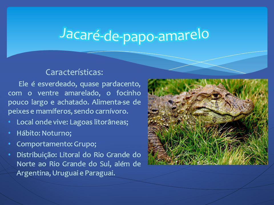 Características: Ele é esverdeado, quase pardacento, com o ventre amarelado, o focinho pouco largo e achatado. Alimenta-se de peixes e mamíferos, send