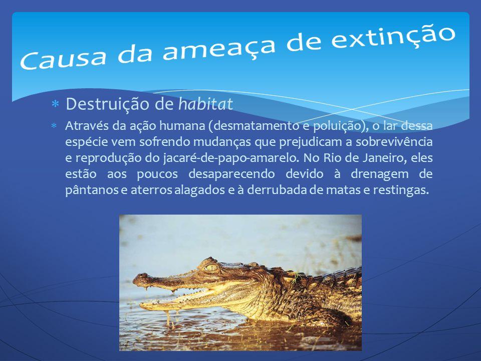  Destruição de habitat  Através da ação humana (desmatamento e poluição), o lar dessa espécie vem sofrendo mudanças que prejudicam a sobrevivência e
