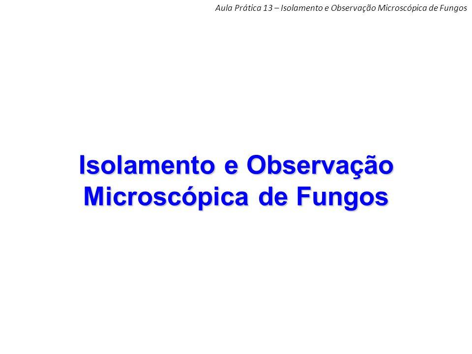 Isolamento e Observação Microscópica de Fungos Aula Prática 13 – Isolamento e Observação Microscópica de Fungos