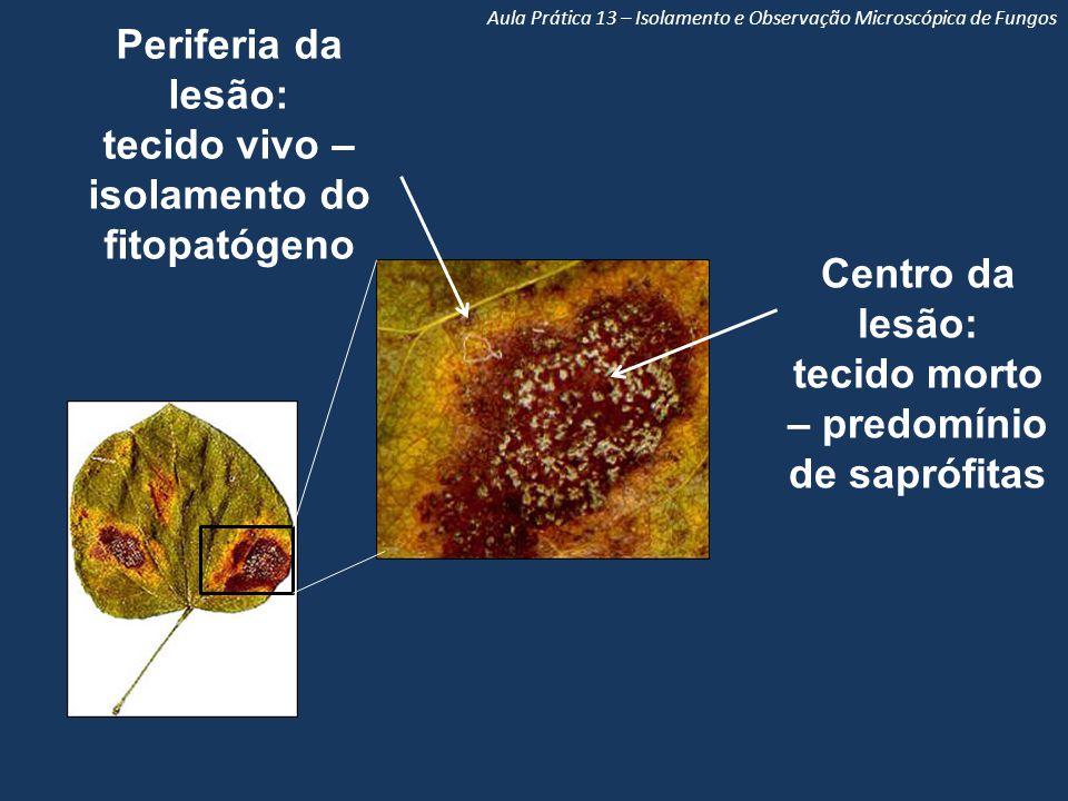 Aula Prática 13 – Isolamento e Observação Microscópica de Fungos Centro da lesão: tecido morto – predomínio de saprófitas Periferia da lesão: tecido vivo – isolamento do fitopatógeno