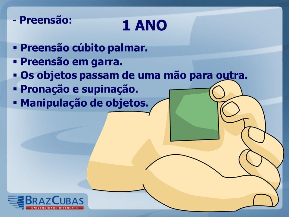 1 ANO - Preensão:  Preensão cúbito palmar.  Preensão em garra.  Os objetos passam de uma mão para outra.  Pronação e supinação.  Manipulação de o