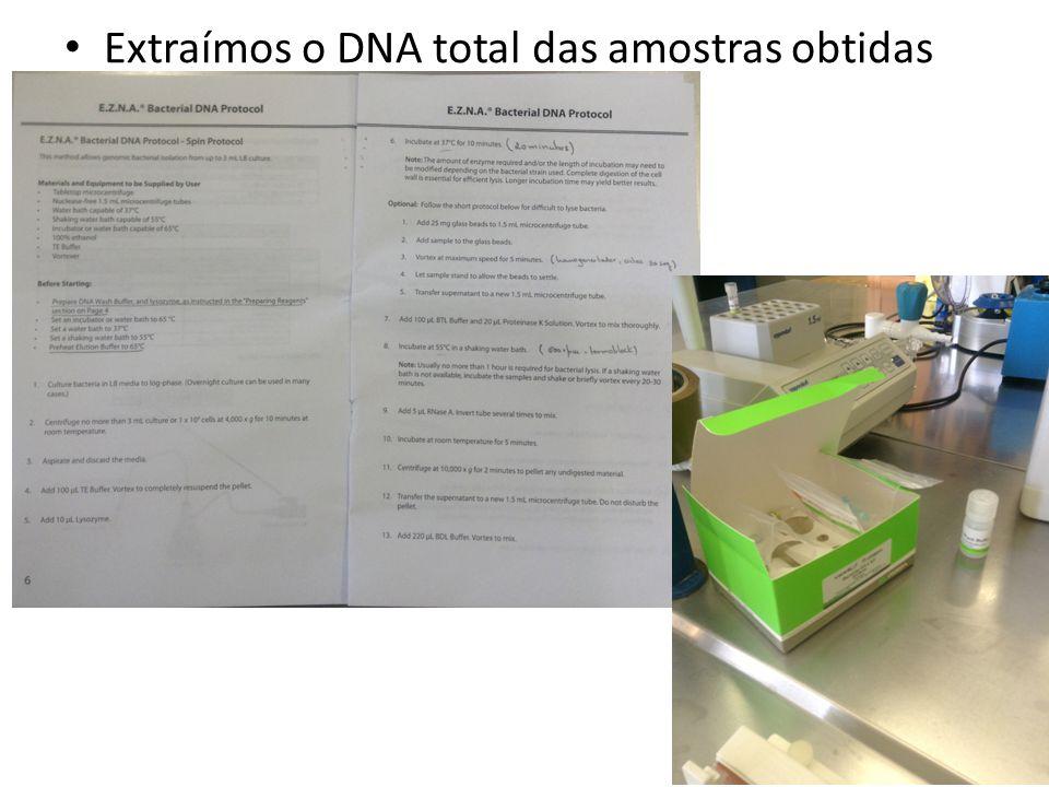 Extraímos o DNA total das amostras obtidas