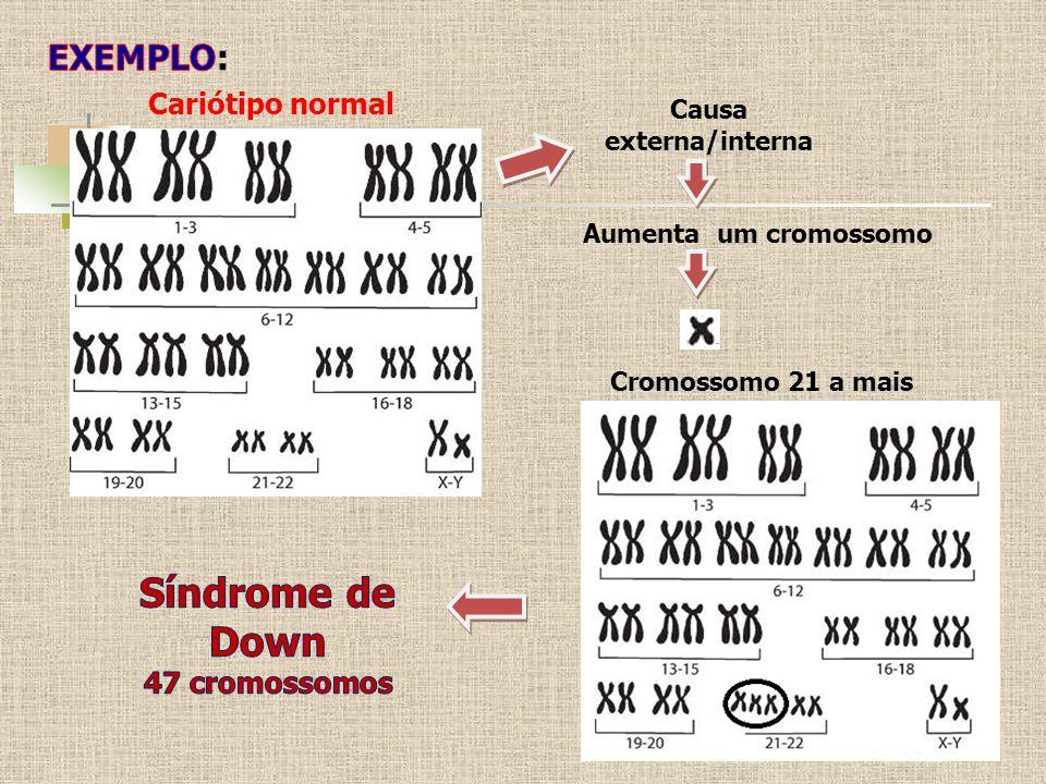 Cariótipo normal Causa externa/interna Cromossomo 21 a mais Aumenta um cromossomo