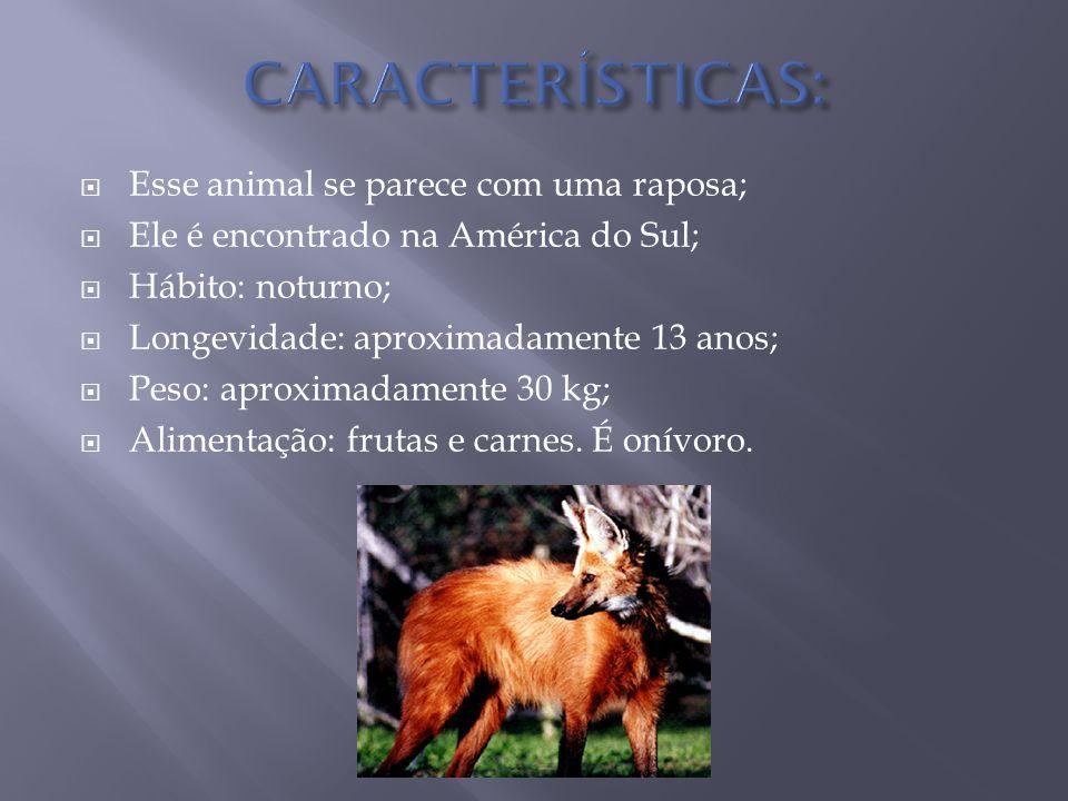  Esse animal se parece com uma raposa;  Ele é encontrado na América do Sul;  Hábito: noturno;  Longevidade: aproximadamente 13 anos;  Peso: aproximadamente 30 kg;  Alimentação: frutas e carnes.