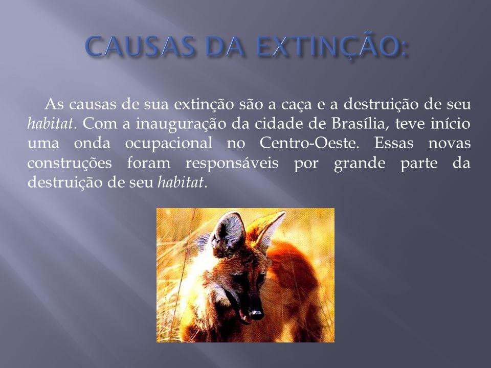 As causas de sua extinção são a caça e a destruição de seu habitat. Com a inauguração da cidade de Brasília, teve início uma onda ocupacional no Centr